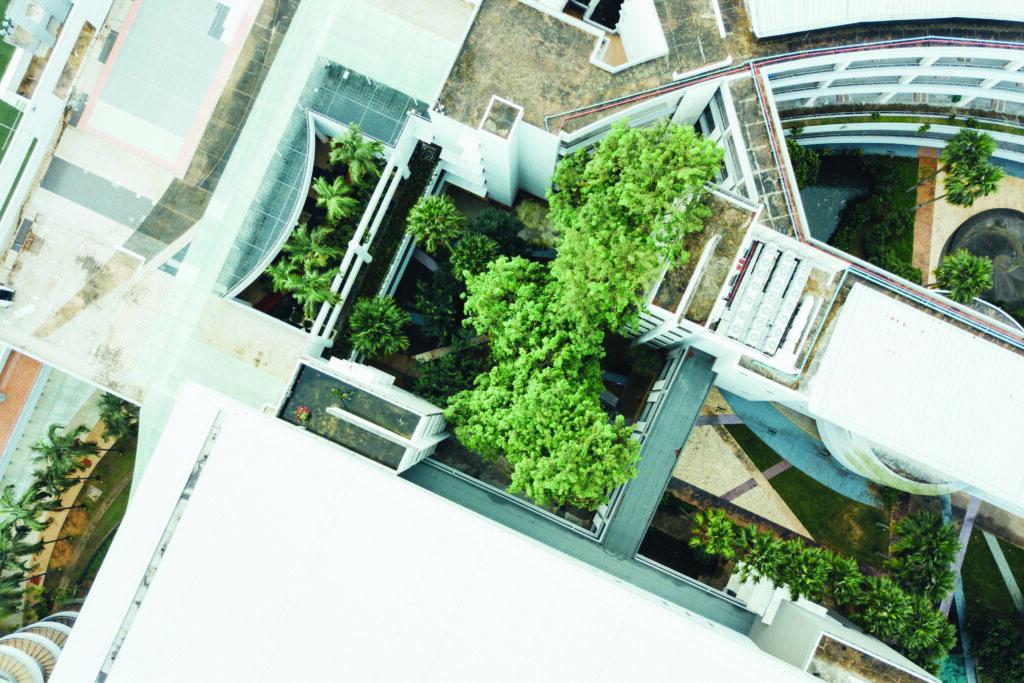 Les mycorhizes, les alliées des toits verts